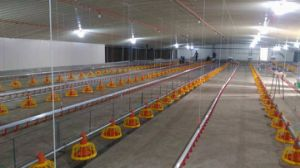 Modern and Advanced Automatic Poultry Equipment for Broiler/Breeder/Layer Chicken pictures & photos