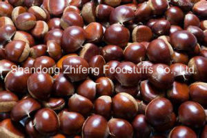 Fresh Chestnut with Competetive Price pictures & photos