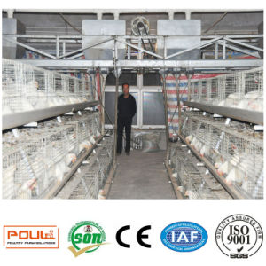 Poultry Farm Equipment or Broiler Chicken Cages System From Henan Poul Tech pictures & photos