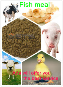 Hot Sale&High Protein for Animal Feed -Fish Meal pictures & photos