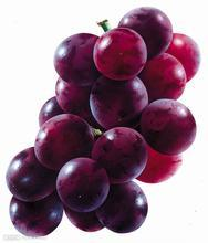 Mini Cold Storage Room/Cold Room for Storing Grape pictures & photos