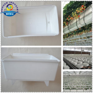 Bato Allround Trough Plant Trough pictures & photos