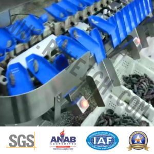 Trepang Abalone IP69 SUS 316 Grading Machine pictures & photos