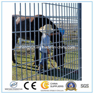 PVC Coated Wired Mesh Fence/Welded Wire Fence Panels (manufacturer) pictures & photos