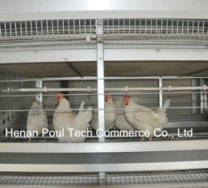 Galvanization Automatic Breeder Chicken Cage System (H type) pictures & photos