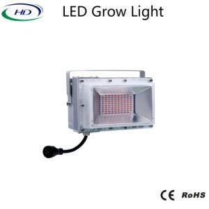 800W Full Spectrum Module LED Grow Light for Marihuana/Hemp pictures & photos