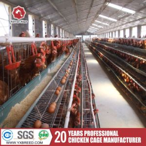Cheap Broiler Chick Breeding Cages pictures & photos
