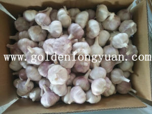 Fresh Normal White Garlic Packed with Carton pictures & photos