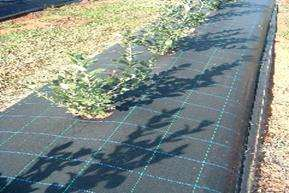 UV Resistant Weed Control Fabric/ Ground Cover pictures & photos