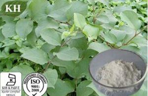 Pure Natural Polygonum Cuspidatum Extract - Resveratrol 98% by HPLC pictures & photos
