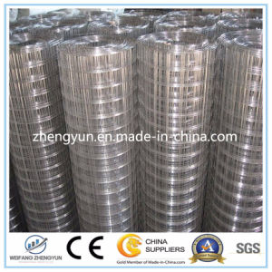Hot Dipped Galvanized Welded Wire Mesh/Steel Welded Wire Mesh pictures & photos