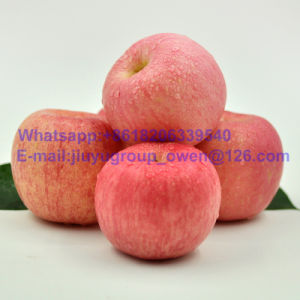 Yantai Origin New Crop Fresh Fruit FUJI Apple pictures & photos