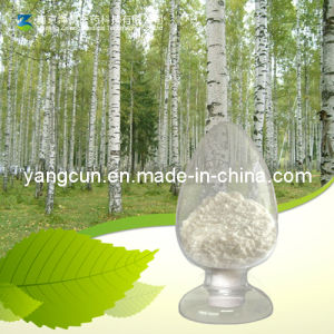Birch Bark Betulinic Acid 98% pictures & photos