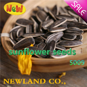 Export to Middle East Sunflower Seeds 5009 with Good Price for Human Cunsumption
