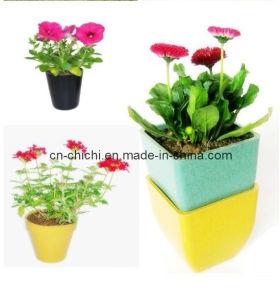 Flower/Plant Pot/Bamboo Fiber/Plant Fiber/Vase/Garden/Promotional Gifts/Home Decoration/Garden Decorations/Natural Bamboo Fiber Biodegradable Pots (ZC-F20016)