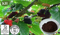 Mulberry Fruit Extract Anthocyanidins 10%-25%; Ratio Extract pictures & photos