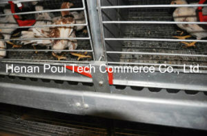 High Quality Automatic Pullet Chicken Cage System (H type) pictures & photos