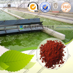 High Quality Natural Haematococcus Pluvialis Extract Astaxanthin pictures & photos