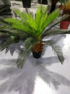 Best Selling Artificial Plants of Big Cycas Jf13010747 H: 160cm pictures & photos