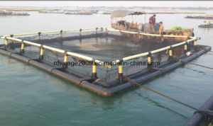 2016 HDPE Aquaculture Tilapia Fish Culture Floating Cage pictures & photos
