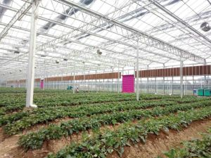 Professional Standard Evaporative Greenhouse Poultry Cooling Pad pictures & photos