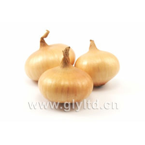 Chinese Fresh Red, Yellow Onion with Mesh Bag pictures & photos