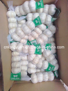 Fresh Purt White Garlic with Small Packing pictures & photos