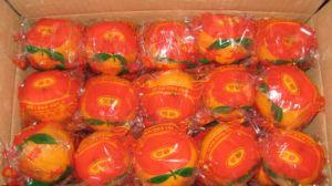Sweet Taste Fresh Navel Orange pictures & photos