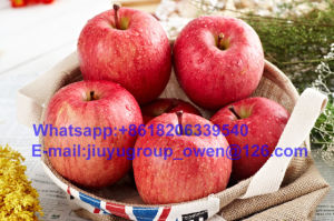 Shandong Origin New Crop FUJI Apple Food Grade pictures & photos