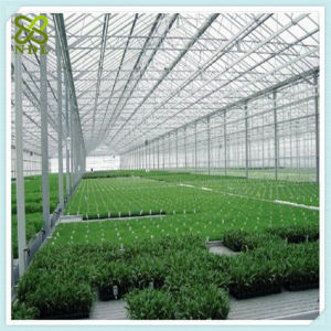 Multi Span Agricultural Polycarbonate Greenhouses for Vegetable pictures & photos