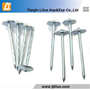 Electro Galvanized Umbrella Head Roofing Nails pictures & photos