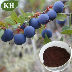 Blueberry Extract, Anthocyanidins, Anthocyanins, Pterostilbene pictures & photos