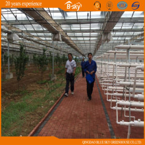 Low Cost Plastic Film Greenhouse for Planting Vegetables and Fruits pictures & photos