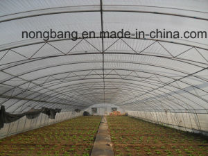 Vegetable Used Plastic-Film PC Greenhouse for Sale pictures & photos