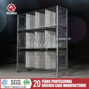 Poultry Farm Equipment Bird Chicken Cage with Automatic Feeding System pictures & photos