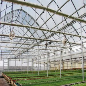 Factory Price Manual and Automatic Plastic Arch Green Greenhouse pictures & photos