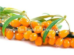 100% Pure Seabuckthorn Oil Supercritical CO2 Extarct pictures & photos