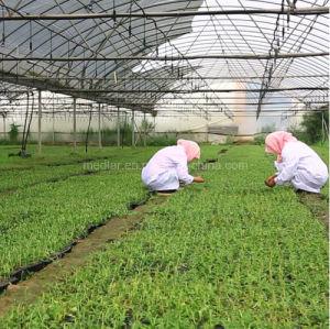 Medlar Organic Wolfberry Dried Goji Berry pictures & photos