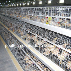 Poul Tech Pullet Chicken Cage (A Frame) pictures & photos