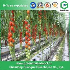 Hot Sale Complete Hydroponics Plastic Film Greenhouse on Sale pictures & photos