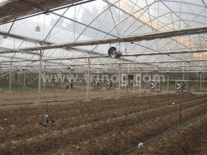EU model multi-span film agricultural greenhouse pictures & photos
