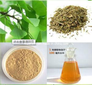 (Ginkgo Biloba Extract) --Flavones 24% Lactones 6% Ginkgo Biloba pictures & photos
