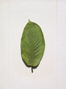 Wall-Mounted Resin Leaf-Sample for Home Decoration / Hotel Decoration