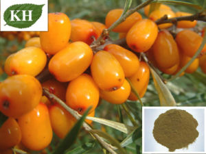 Pure Seabuckthorn Seed Oil/Seabuckthorn Seed Oil Extract pictures & photos