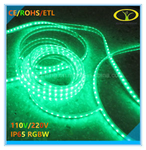 Hot Sales 120V/220V IP65 RGBW LED Strip with Ce RoHS ETL Certification pictures & photos