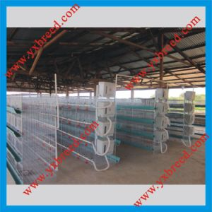 Innaer Poultry Farm Provide You High Quality Broiler Chicken Cage (H4L80) pictures & photos