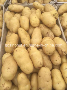 New Shandong Potato pictures & photos