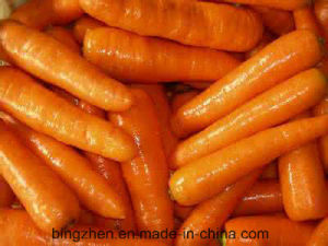 Chinese Fresh Carrot New Crop Harvest of 150g/200g/250g/300g/350g pictures & photos