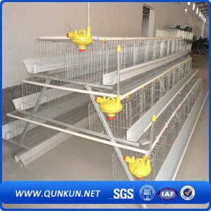 Automatic Chicken Layer Cage for Sale in Philippines pictures & photos