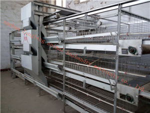 Galvanized Automatic Pullet Cage Certificate of ISO9001 pictures & photos